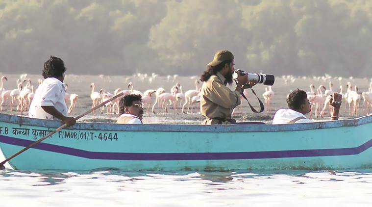 Locals have established an informal Sewri Flamingo Point to watch the birds. Express