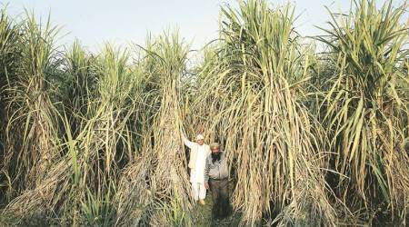 Centre's sugarcane price for 2017-18 hiked 10.9 per cent