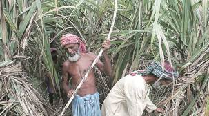 Solapur: Cane farmers' protest against mills continues