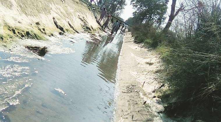 Farmers clean Kotla branch canal in Bathinda.  Express