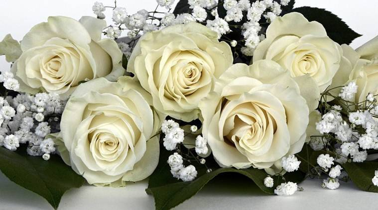 happy rose day 2017 importance and significance of each rose colour