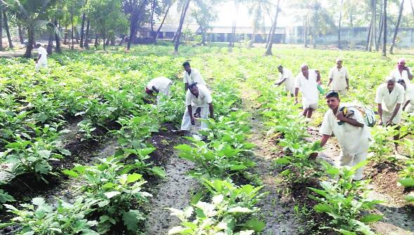 prison agriculture, maharashtra, prison farms, yerwada jail, agriculture technology