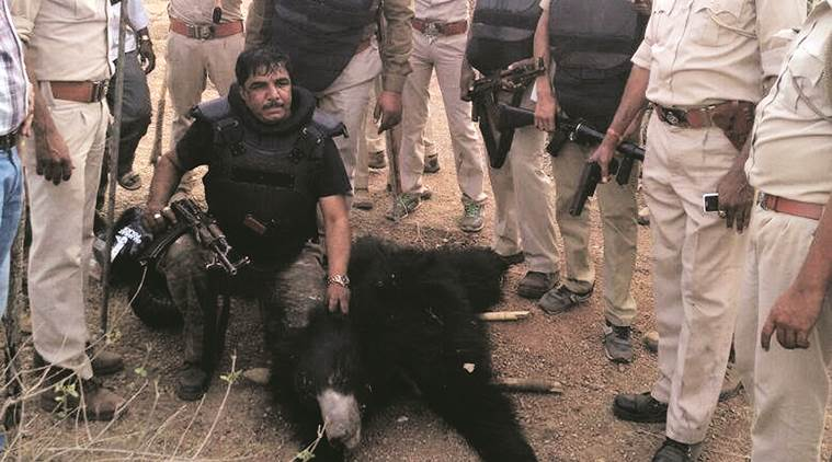 sloth bear, sloth bear killing, man eater sloth bear, sloth bear kill men, Banaskantha villagers, Banaskantha bear attack, sloth bear attack, indian express news, india news