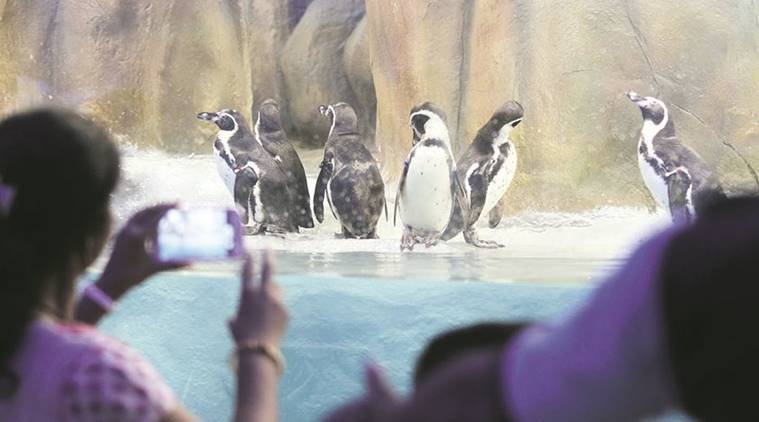 Mumbai zoo, Byculla, Byculla zoo, Penguin in Mumbai zoo, school children visit zoo,  Veermata Jijabai Bhosale Udyan and zoo,  Byculla zoo, indian express news