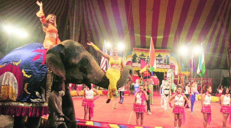 circus owner, animal abuse, NGOs against Circus owner,  PETA, PFA, Jallikattu supporters, indian express news