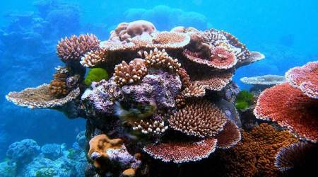 Coral reefs at risk of dissolving as oceans get more acidic:study