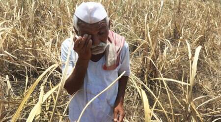 Rajkot: Suicide bid by farmer over low onion prices