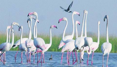 Nal Sarovar sanctuary: Migratory birds being poached, says Gujarat govt