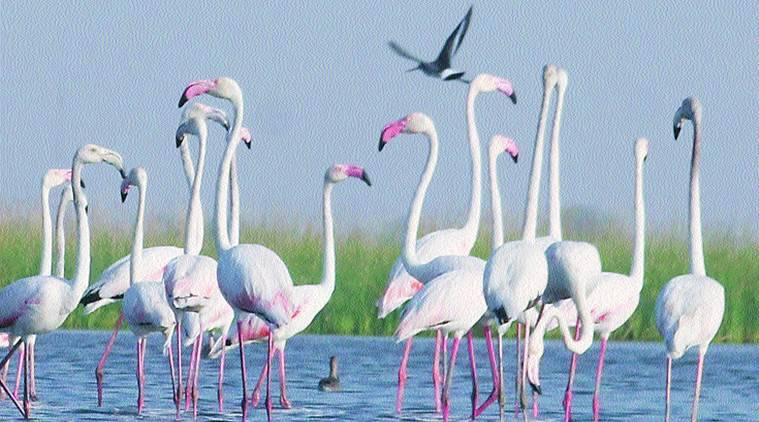 Nal sarovar bird sanctuary, Gujarat news, Latest news, India news, National news, Latest news, India news, National news, Latest news