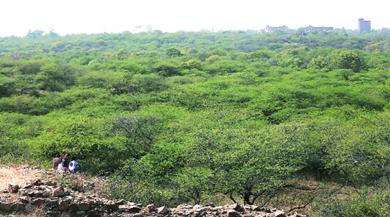New Delhi: Forest dept prepares to replace vilayati kikar with native  species | Cities News,The Indian Express