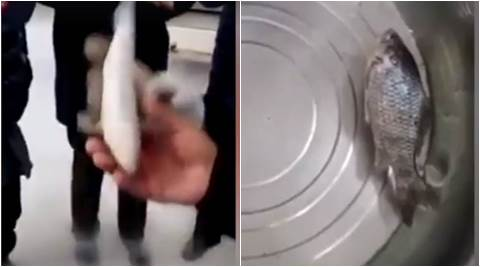viral videos. crazy videos, magical videos, funny videos, frozen fish coming to life, dead fish coming to life, indian express, indian express news