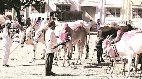 Punjab: Varsity launches mobile app to answer queries of farmers onlivestock