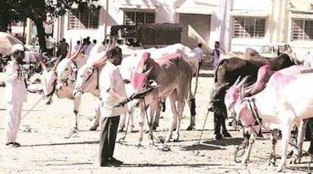 Punjab: Varsity launches mobile app to answer queries of farmers on livestock