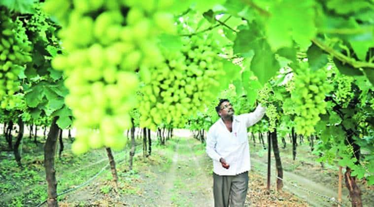 Marathwada, Marathwada village, Marathwada drought, Marathwada water management, india news