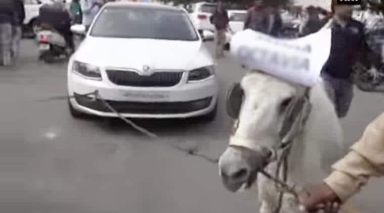 skoda car, skoda car donkeys, skoda car owner donkeys, skoda car donkeys owner, skoda donkeys owner, indian express, indian express news, trending, trending in india, bizarre