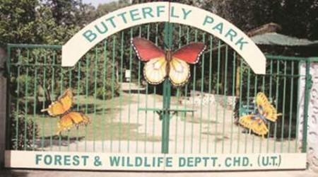 Delhi government to develop a butterfly park