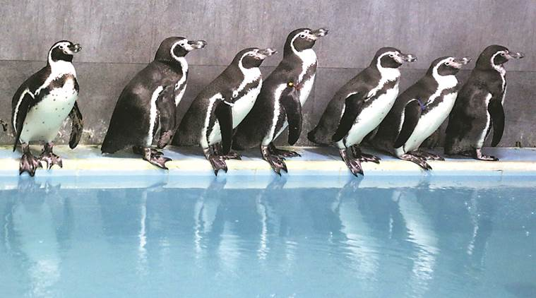 Bombay High Court, Veermata Jijabai Bhosale Udyan, Byculla zoo, exhibition of Humboldt penguins, Humboldt penguins in Mumbai news, Latest news, India news, National news