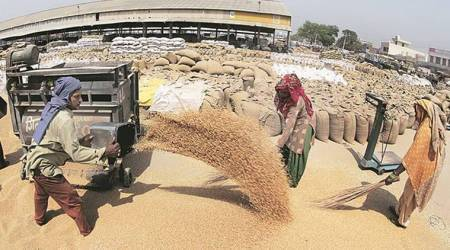 Ludhiana: Wheat piles up in mandis due to slowlifting