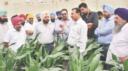 Cropping patterns: Diversification dilemma on the ground