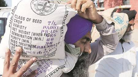 Punjab fails to cut down area under rice cultivation
