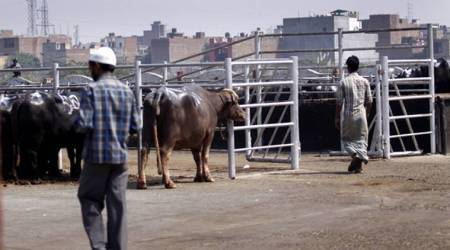Maharashtra: State urges civic bodies to follow MPCB rules for dealing with slaughterhousewaste