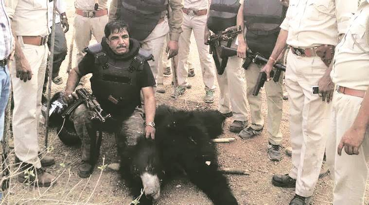 Gujarat news, Gujarat Killing of Sloth bear, Panel to probe killing of Sloth bear, latest news, India news, National news, latest news, India news, National news, latest news, India news, National