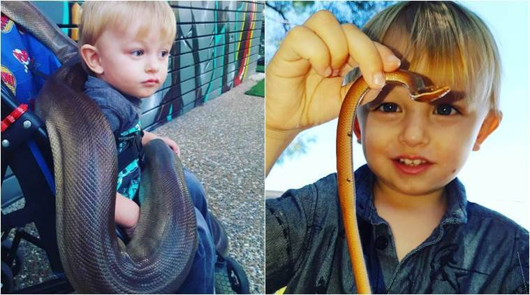 video of kid snake catcher of Australia, clip of young snake catcher, goldcoast snake catcher, one year old snake catcher, indian express, indian express news