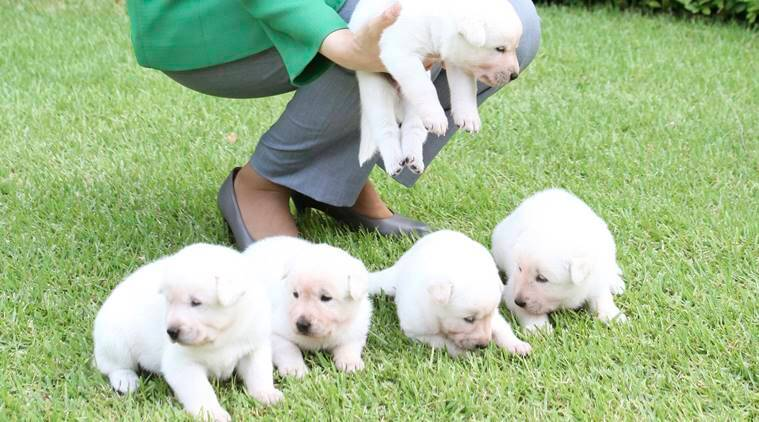 South Korea finds a home for 2 puppies Park left behind