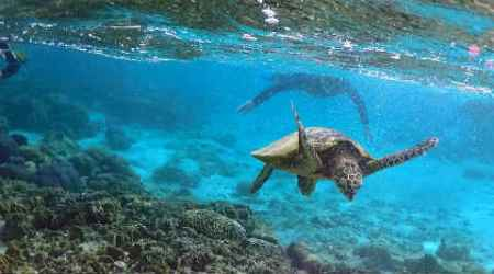 New 'Avatar' style technology allows people to remotely manoeuver turtles via thought