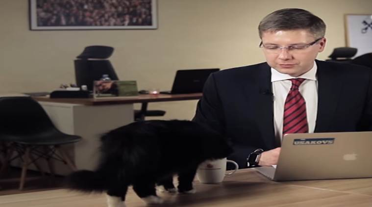 cat interrupts mayor's live video, cat jumps on Latvian mayor's show, cat drinks coffee from latvia mayor, cat stops live session, viral videos, comedy videos, funny videos, indian express, indian express news