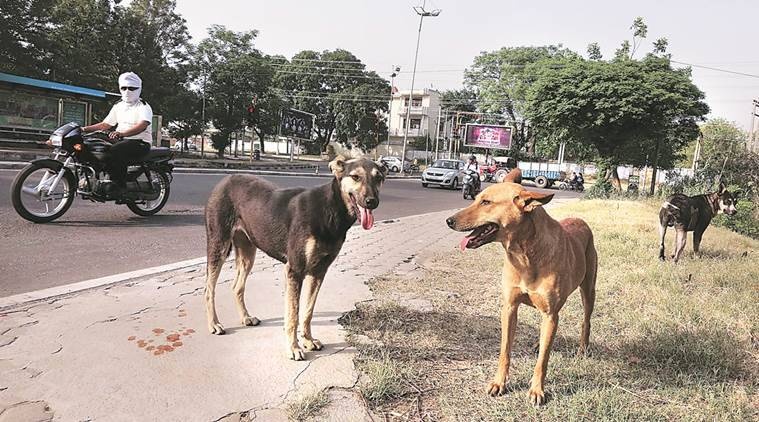 Dehradun stray dogs killed, stray dogs killed, Dehradun army officer kills stray dogs, animal activist, cruelty against animals, Bipin Rawat, indian express news
