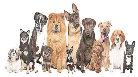 The family tree of dogs
