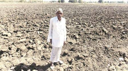 Bumper Harvest: Smile's back on Madhya Pradesh's farmers