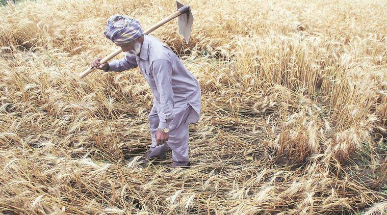 an indian farmer in marathi अन्नदाता - a poem by on p4poetry  p4poetry is a place for indian poets to read,  the farmer will eventually awaken deadened skin flares brightly.