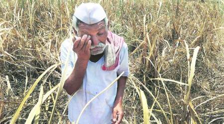 Tamil Nadu News, farmer Suicide, Farmer Drought, Loan Relief, Prime Minister office, India News, Indian Express News