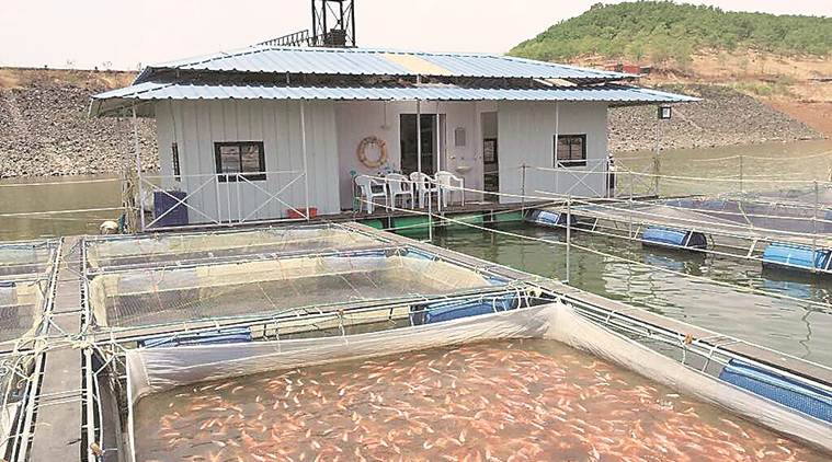 Fish farming made easy!
