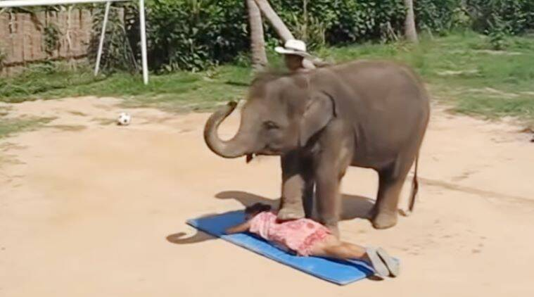 These Funny Elephant Videos Will Bring An Instant Smile To Your Face The Indian Express