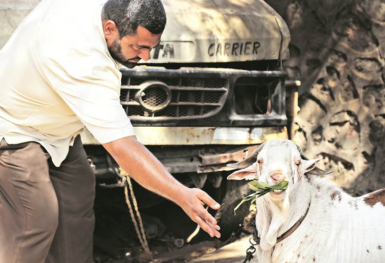 Goat trade booms online | India News, The Indian Express