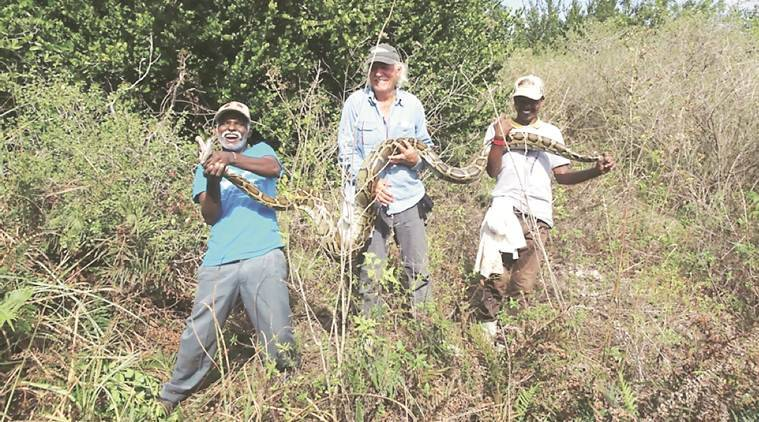 Python, Python hunters, Irulas, Romulus Whitaker. Whitaker, Irulas Whitaker, Irulas Florida, Florida pythons, snake catching tribe, Irula snake catchers, Madi Sadayan, Vadivel Gopal, Indian Express, Sunday Express
