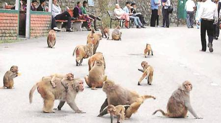 Monkey population won't wait for panels, says Delhi High Court