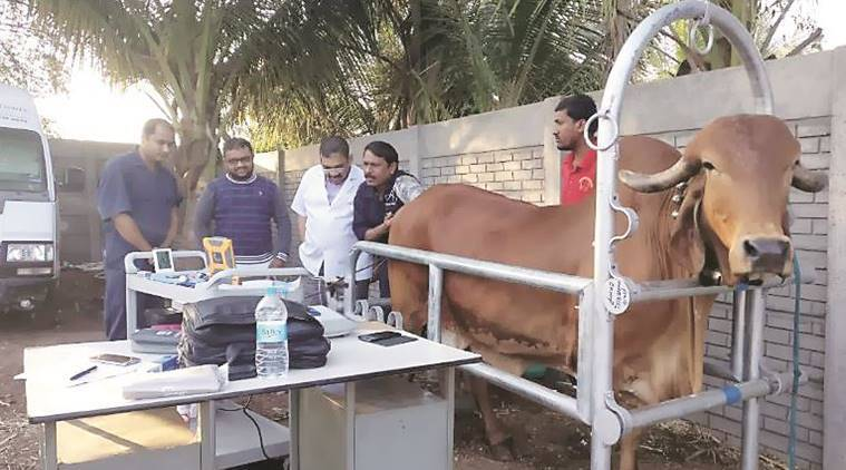 pune, pune cow lab, pune cows, cow lab, cow breeding lab, india news, pune news