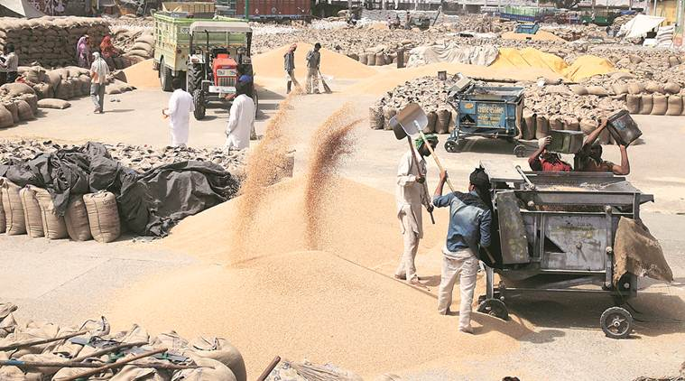 Punjab wheat sale, Wheat sale and purchase, Punjab agriculture news, India news, Latest news, India news, National news
