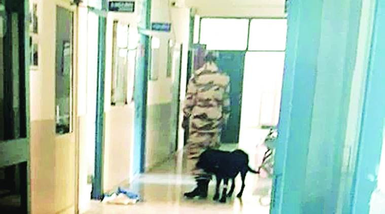 Narendra Modi, PM Modi, PM Modi's security dog, security dog dental checkup, security dogs, indian express news