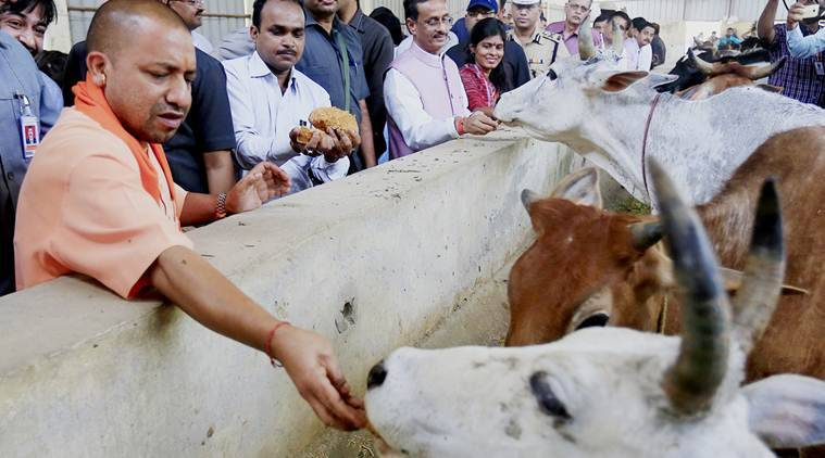 yogi adityanath, gau raksha, protection of cows, rss, bjp, service of cows, india news, latest news