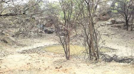 To keep animals in their habitat, water pits in Aravalli filled