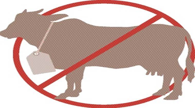 beef ban, cow slaughter, gau raksha, slaughter ban, indian express