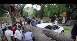 Delhi: Tree Falls On Car Near JantarMantar