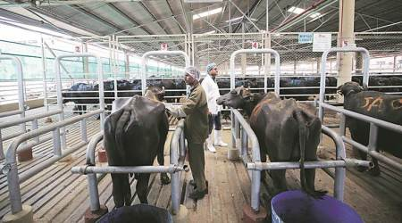 Environment Ministry notifies nationwide: New rules ban sale of cattle for slaughter at markets