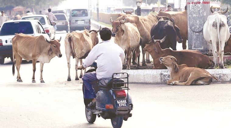 New India, Narendra Modi, Gau Rakshaks, cow protectors, Yogi Adityanath, Pehul Khan, Imteyaz Khan, Mohammad Akhlaq, Indian Express, Express columns