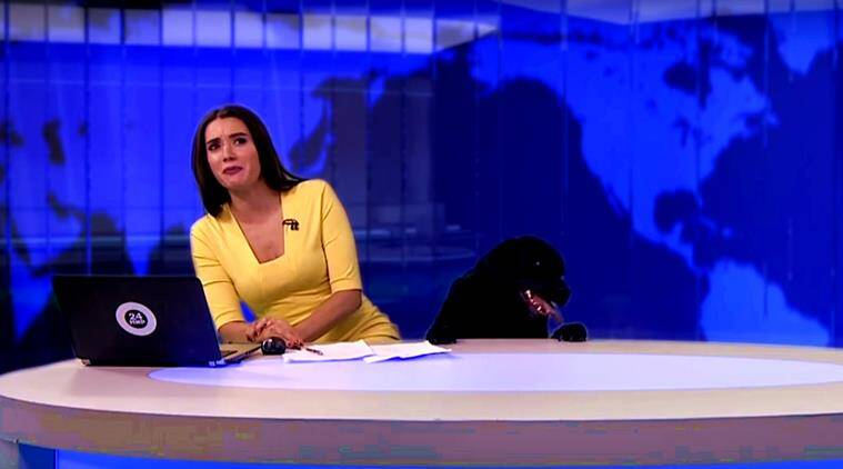 dog on live tv, dog interrupts live news, news anchor black dog, dog crashes live news on tv, dog live news, black labrador news live, viral videos dog, indian express, indian express news